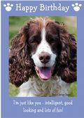 "English Springer Spaniel-Happy Birthday - ""I'm Just Like You"" Theme"